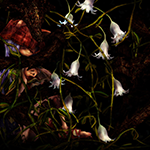 眠樹©sisioumaru